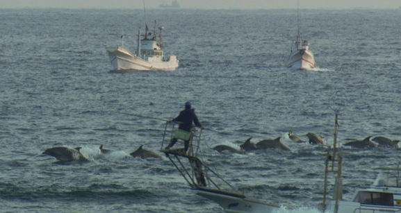 Dolphin hunters off the coast of Taiji, Japan kill about 2300 dolphins yearly by driving dolphins ashore using underwater sound. The dolphin drive, as it is called, is financed primarily through the captive dolphin industry which pays dearly for trained dolphins.