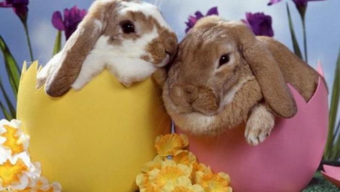 Easter-bunnies-Greek