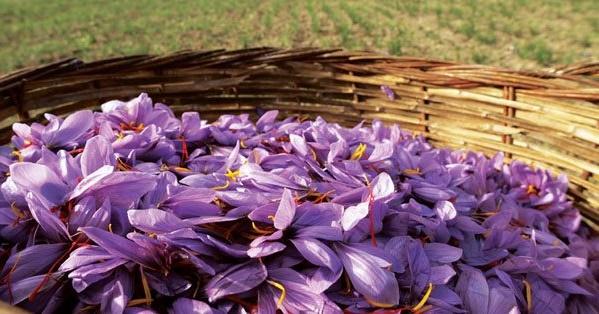 Kozani saffron