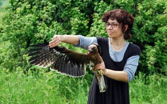 Birds Released Back_Kerkini