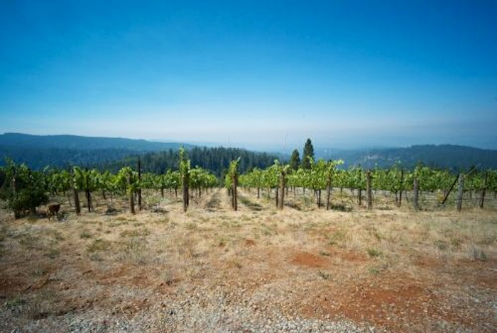 Tryphon-vineyard-early-summer 2