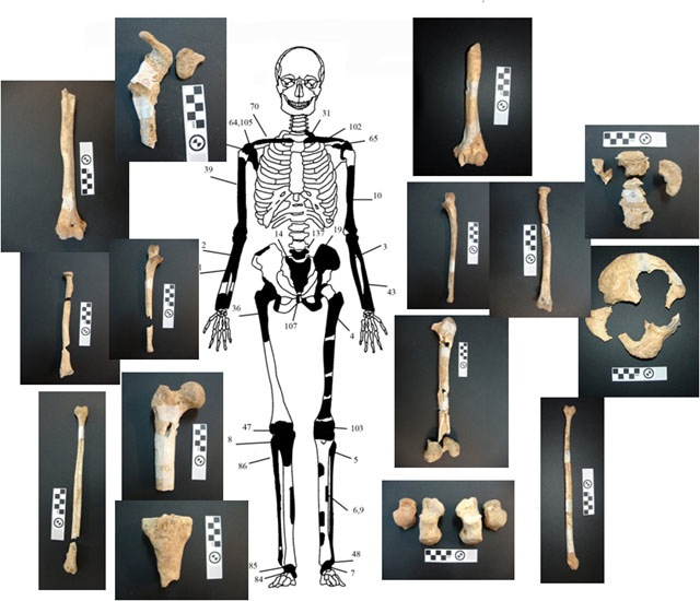 Identified bones from the skeleton of the younger male (mid-thirties)