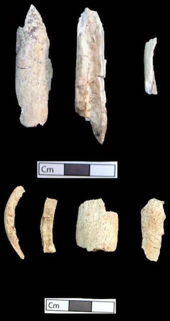 Figure 6. Cremated bones of an adult of indeterminate age and sex