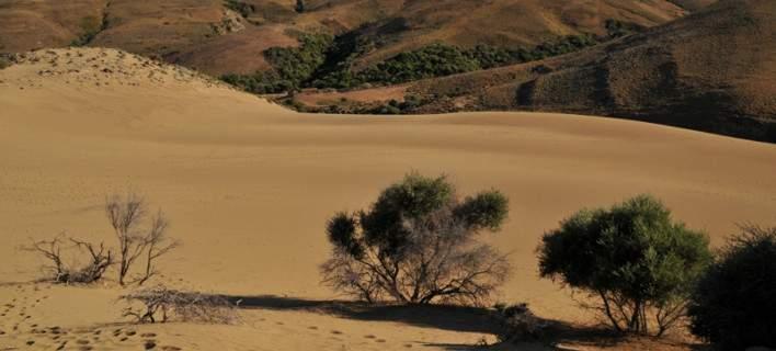 lemnos desert