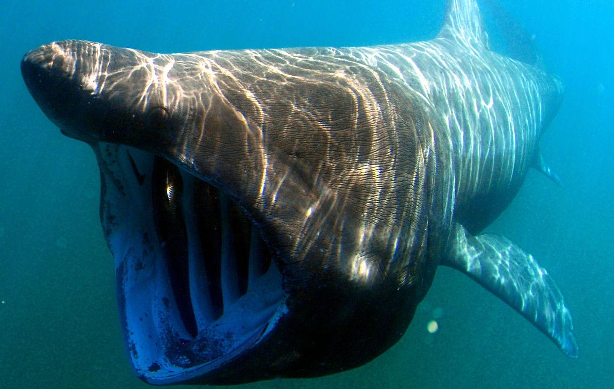 marine animals greece