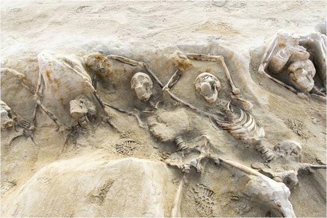 ancient greek skeletons
