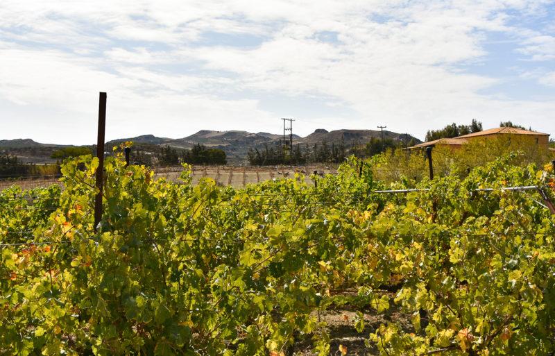 Wines of Crete vineyards