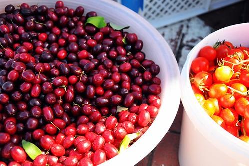 Cornelian cherry infused water