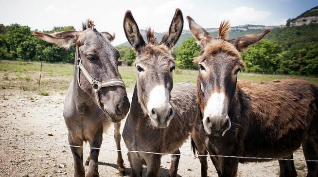 donkey milk ancient greek