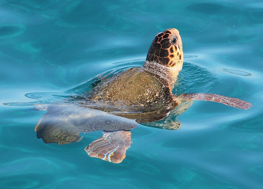 turtle island marathonisi
