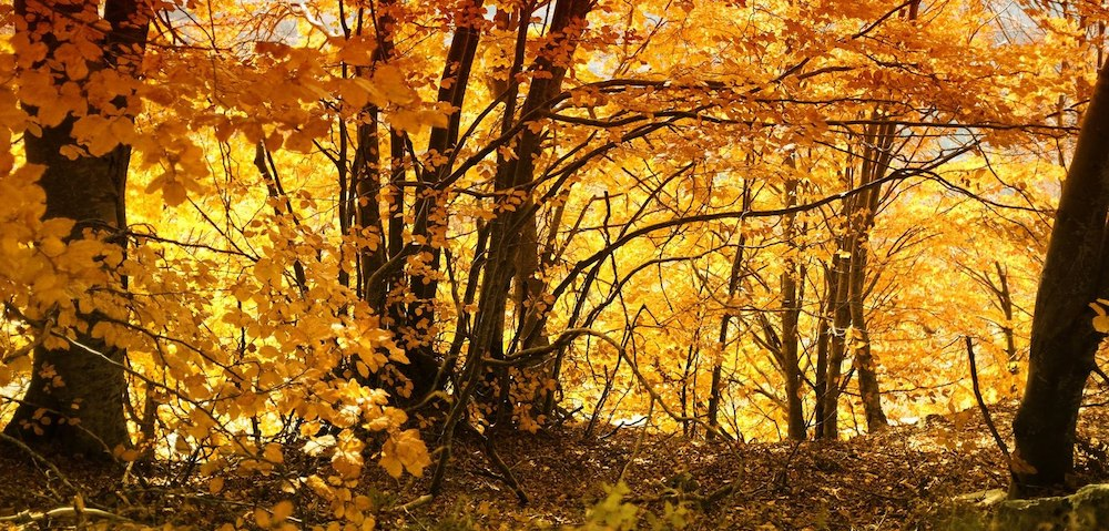 pelion autumn greece