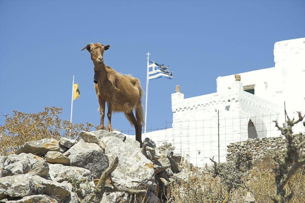 goats greece