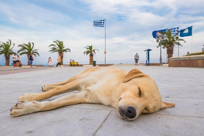 Greek stray dogs