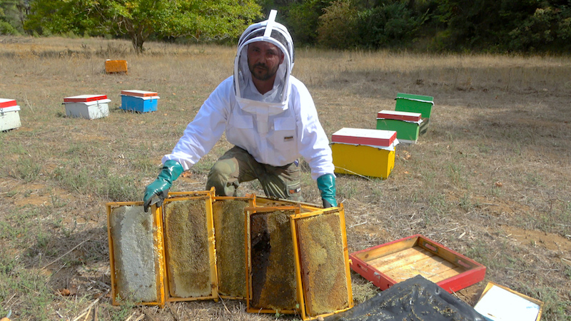 Beekeeper collecting Greek honey