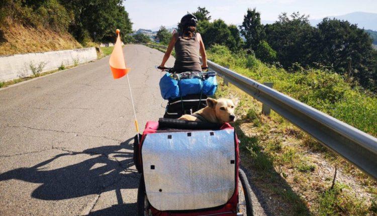 Stray dog Greece Germany on bike
