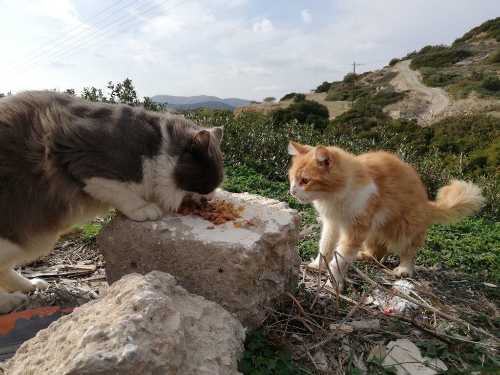 cat sanctuary greek island