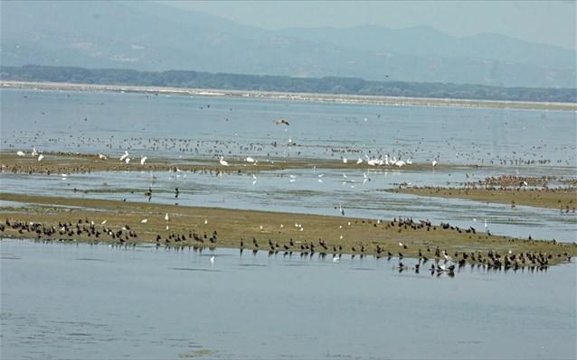 Swans Greece
