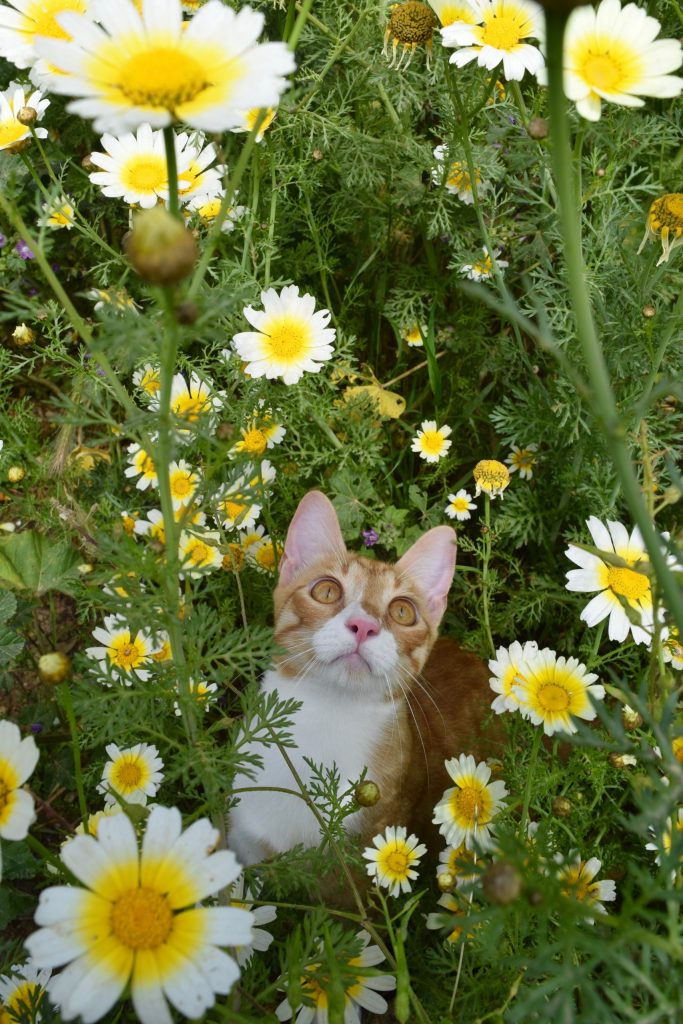 cat sanctuary greek