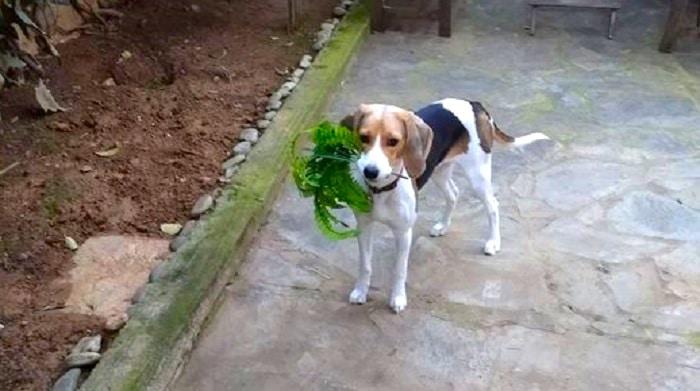 Pet dog in Greece