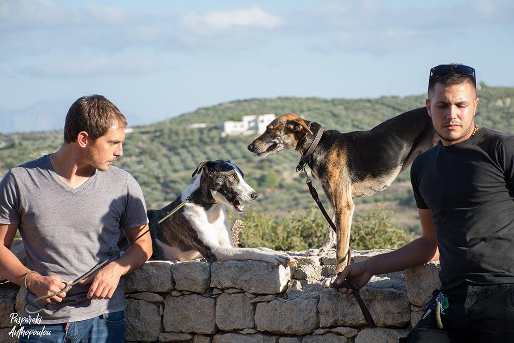 Cretan hounds greece dogs