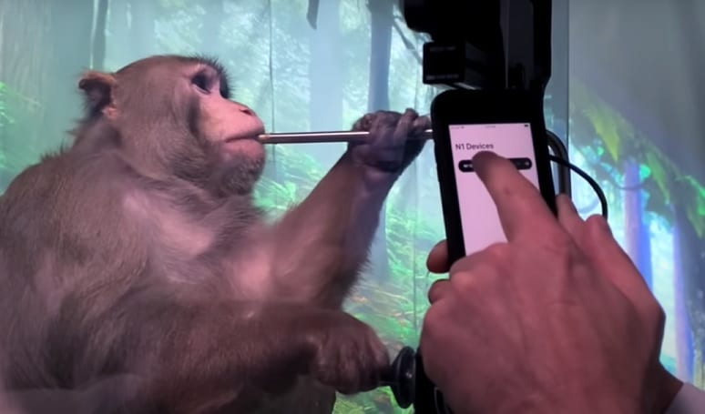 Monkey Elon Musk