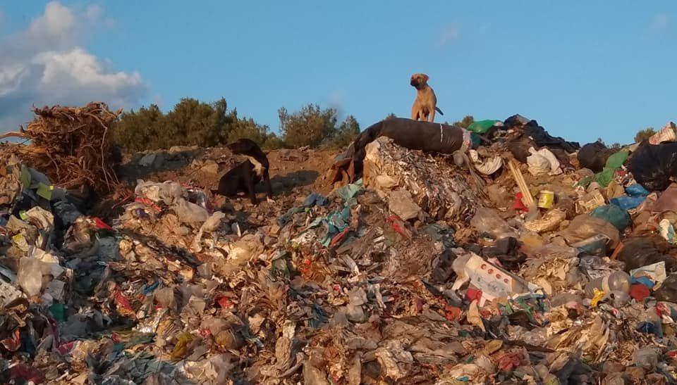 the Loutraki Landfill's Garbage Dogs