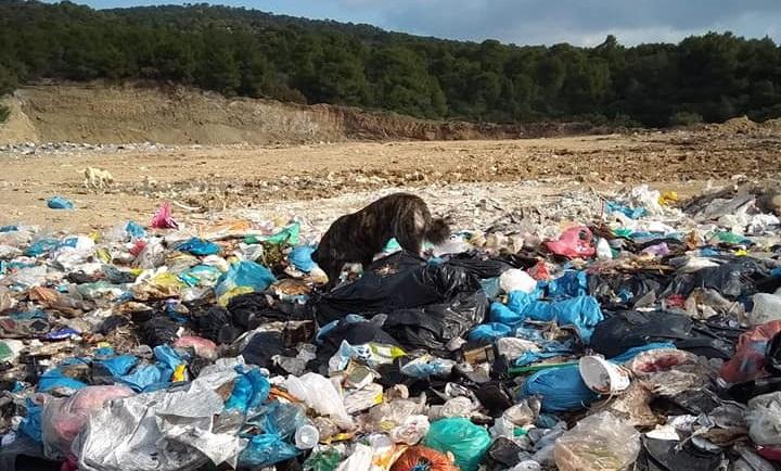 Loutraki Landfill's Garbage Dogs