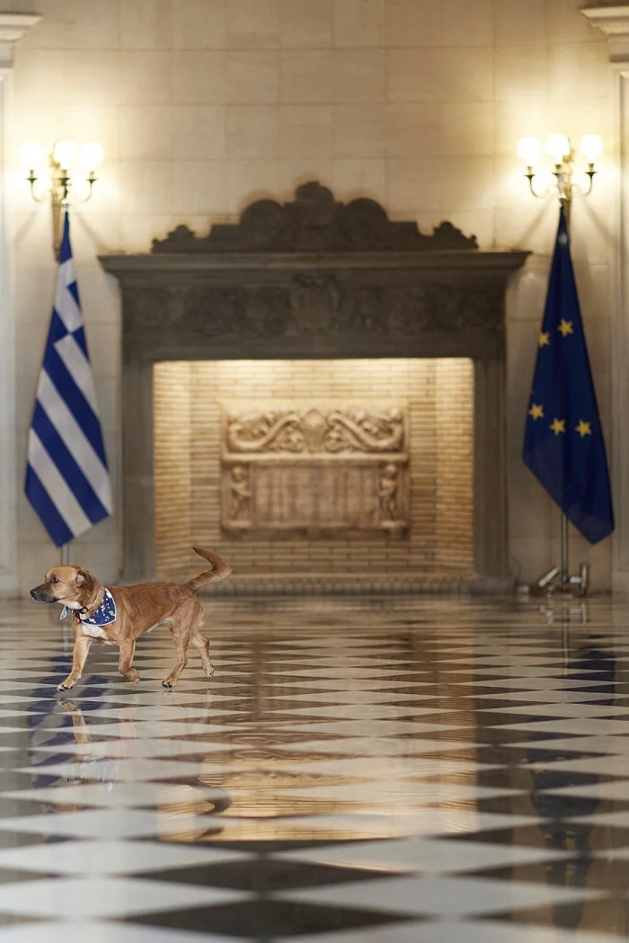 Greece Mitsotakis stray dog