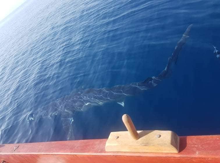 Sharks greece