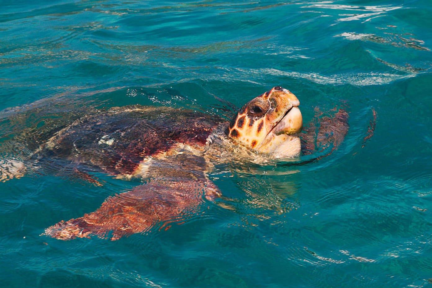 greece marine animals