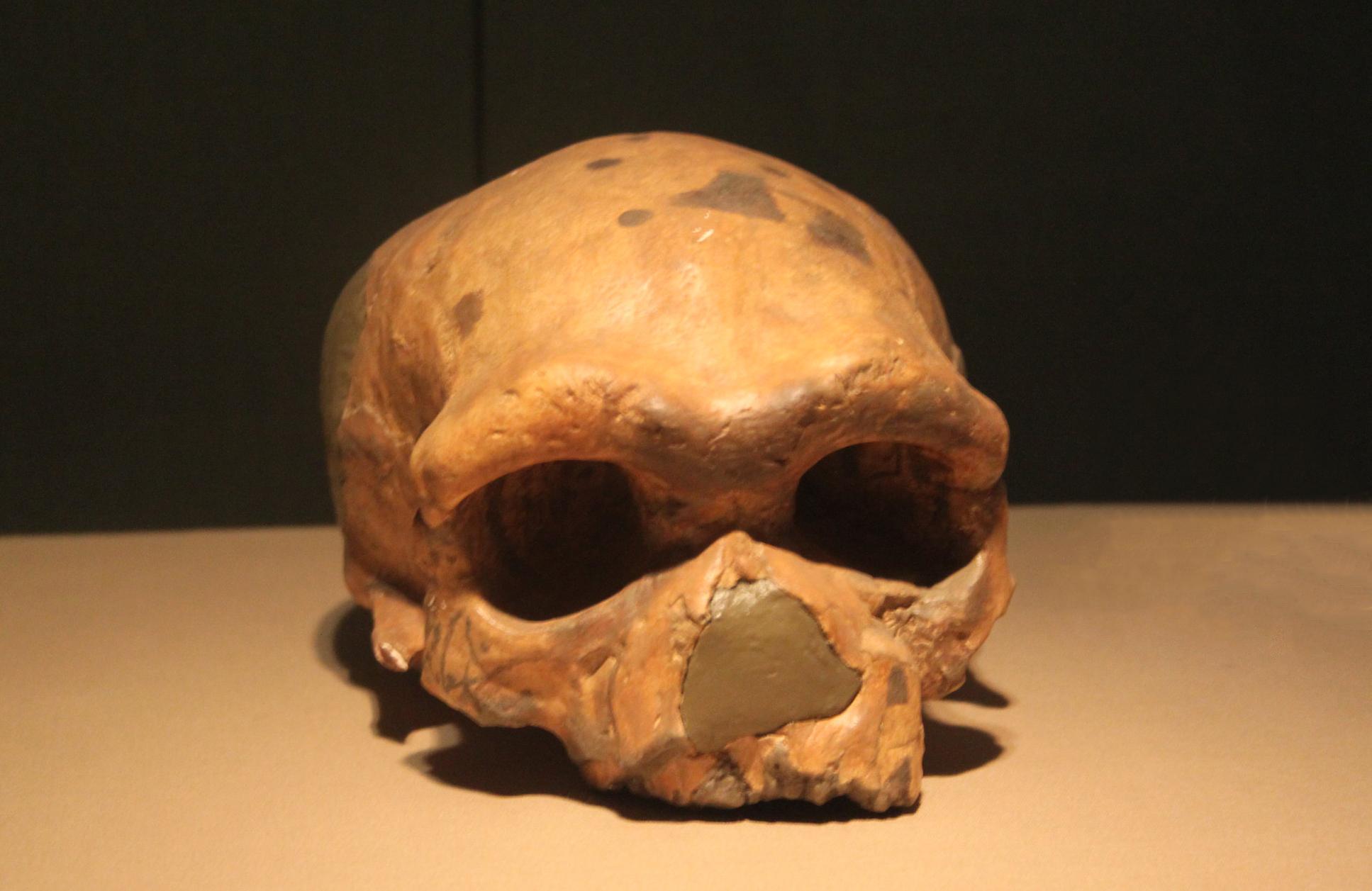 Homo Sapien lived among Dragon Man aka Homo Longi