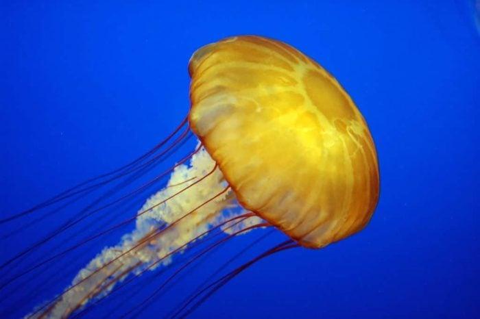 Jellyfish jellies Greece